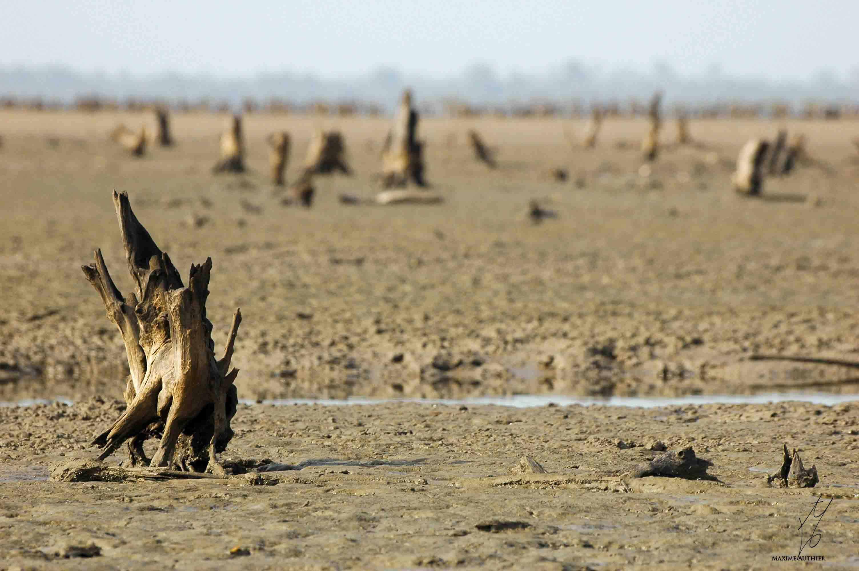 Photographie d'une souche d'arbre dans la Casamance au Sénégal